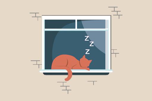 Kedi Uykusu Hakkında Bilmedikleriniz