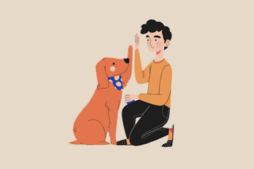 Köpeğinizin Hayatını İyileştirecek Etkenler Petwoon