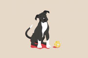 Köpek Bakım Rehberi | Siz Evde Yokken Köpeğinizin Bakımı