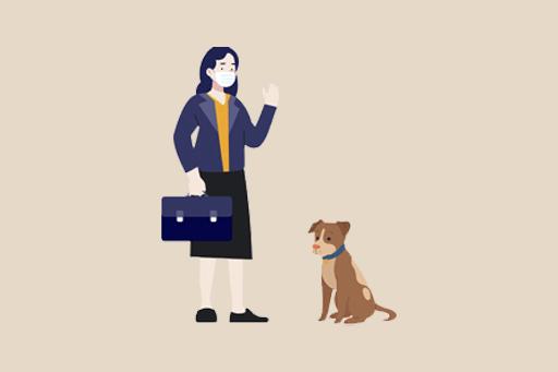 Pandemi Sonrası Köpeğinizin Hazırlığı | Ofise Dönüş İçin İpuçları
